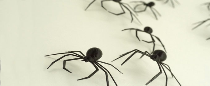 Blog_spiders